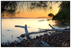 Golden Sky (juliewilliams11) Tags: sunrise waterfront rocky shoreline shore photoborder outdoor serene longexposure newsouthwales australia golden water hdr canon 70d