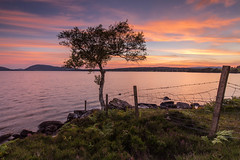 A Sunset Loner .. (Gordie Broon.) Tags: lochduntelchaig sunset lonetree fence bunachton scottishhighlands essich scotland schottland landscape hills heuvels collines reservoir natural ecosse escocia lac meer caledonia dunlichity ferns heather colinas scenic scozia invernessshire szkocja scenery inverness alba gordiebroonphotography tranquil thegreatglen trout fishing see paysage farr paesaggio loch lake nature summer 2016 august northernscotland canon5dmklll paisaje canon1635f4l geddies geotagged