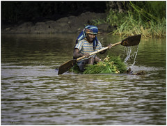 Traditional Papyrus Boat on Lake Tana (Luc V. de Zeeuw) Tags: boat ethiopia man papyrus rowing water bahirdar amhara