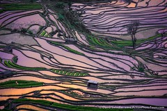 Laohuzui Detail (David Swindler (ActionPhotoTours.com)) Tags: china laohuzui rice riceterrace riceterraces terrace yuanyang yunnan color sunset water