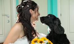 IMG_5673 (colizzifotografi) Tags: sposa casa cane spiritose divertenti