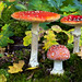 "058.-Amanita muscaria. • <a style=""font-size:0.8em;"" href=""http://www.flickr.com/photos/63890276@N06/6981428446/"" target=""_blank"">View on Flickr</a>"