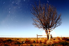 Tree and star trails (tim phillips photos) Tags: tree star trails startrails