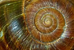 Curves (Deb Jones1) Tags: brown abstract nature beauty canon garden outdoors patterns shell flickrawards debjones1