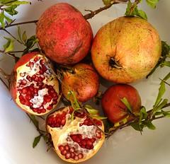Granatäpfel (zikade) Tags: melograno granatäpfel