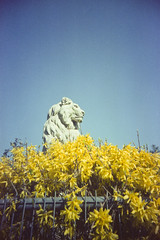 Lion (Saturated Imagery) Tags: film statue 35mm iso200 toycamera leeds lion wideangle vignette expiredfilm meanwood forsythea vivitarultrawideandslim epsonv500 scotchcolour200
