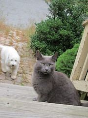 Dog is creeping up on cat. (BuzzFarmers) Tags: dog cat marketing blog greeneyes creativecommons surprise cateyes angrycat buzzfarmers dogsneaksuponcat