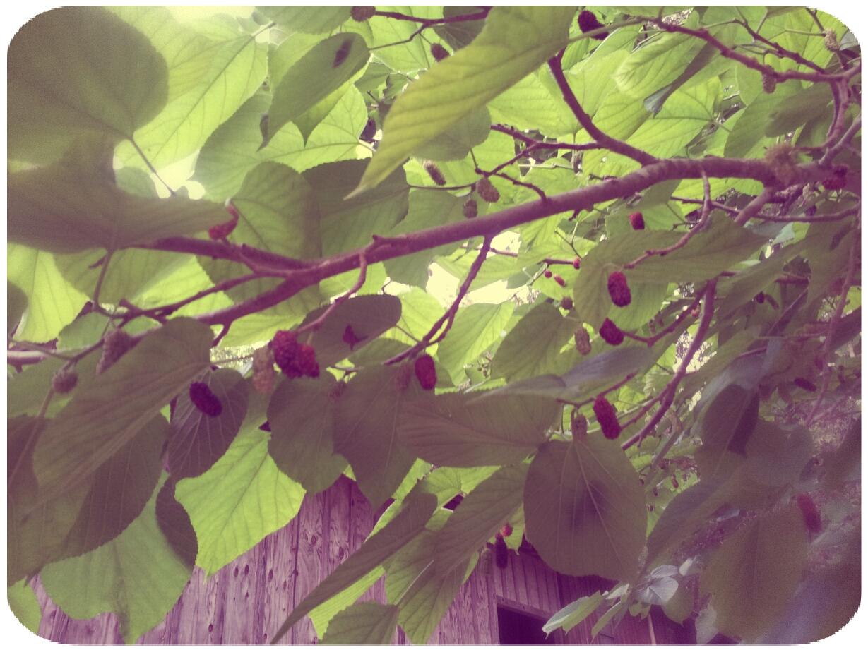 2012-04-27 19.24.43_Melissa_Round1.jpg