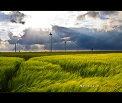 Dramatic sunset over windmills and wheat field, Brabant, Belgium (lathuy) Tags: sunset field clouds contrast belgium belgique wheat over champs dramatic windmills t nuages brabant wallon wallonie bl oliennes orge constraste froment marbais mygearandme mygearandmepremium mygearandmebronze