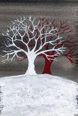alberi 43