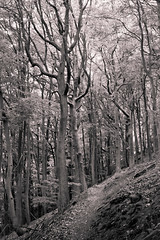 Hohenberg-Trees (mari-we) Tags: wood trees nature forest germany deutschland timber natur holz wald bume pfalz rheinlandpfalz landau pflzerwald annweiler forst trifels sdpfalz rhinelandpalatinate palatinate sdwestpfalz haardtrand annweileramtrifels palatinateforest bindersbach leinsweiler ranschbau