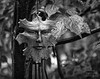Face of the Forest (Dennis Cluth) Tags: art face forest nikon monotone 2470mm