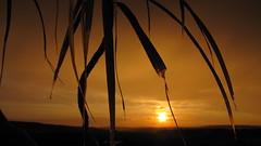 Adios Friday (eagle1effi) Tags: sunset sun backlight canon contraluz favoriten landscape scenery flickr bestof tramonto sonnenuntergang photos sunsets selection powershot fotos friday palme sx1 contrejour auswahl controluce beste gegenlicht contrallum puestadelsol damncool coucherdusoleil badenwuerttemberg selektion bridgecamera artexpression lieblingsbilder eagle1effi byeagle1effi ae1fave podwiato djangosmasterclass yourbestoftoday canonsx1is canonpowershotsx1is tagesbeste