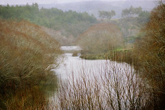 Winter at the river (borealnz) Tags: trees winter newzealand mist river nz otago willows drizzle barebranches southotago