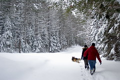 Navigating Fresh Snow (Brandon Bills) Tags: park trees winter red dog pet white snow ny newyork tree hat pine season walking clothing mutt state boots path steps footprints flake away adirondacks fresh hidden jeans trail jacket stepping fallen newyorkstate snowfall flakes heavy walkingaway dressed adirondack freshly nys adk coniferous psc adirondackpark paulsmithscollege paulsmiths