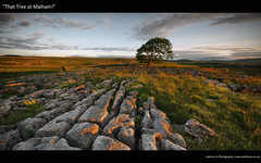 """that tree at malham"" (awhyu) Tags: tree landscape pavement cove yorkshire limestone lone dales malham"