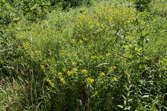 West Virginia 6-12-556 (Cwrazydog) Tags: thomas stewart westvirginia davis parsons blackwaterfalls elkins grafton philippi belington morantown