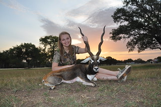 "2012 Gold Medal 22"" Blackbuck"