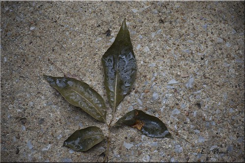 ... Tags: abstract color nature female leaf nikon kansascity nikkor amature