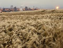 REFINED WHEAT (kenny barker) Tags: landscape lumix wheat refinery panasoniclumixgf1 welcomeuk kennybarker
