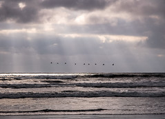 Nine birds flying over the waves (angeloangelo) Tags: ocean sky storm water birds clouds flying waves break d70 flock dramatic formation shafts godlight 1870mmf3545gnikkor