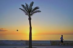 Cala_Millor_216_ji (expat-) Tags: calamillor mallorca sunrise spain balearen