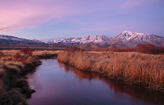 The Edge of Blue to Pink (Laura Zirino) Tags: owensvalley owensriver easternsierra sunrise dawn mountains ca california landscapes landscape light