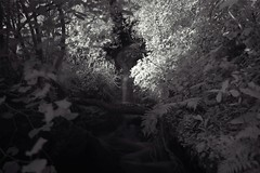 IR waterfall akaroa (colinhansen1967) Tags: d3200 nikon nature blackandwhite edited trees water waterfall ir760 infrared ir