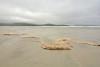 Foam on the beach (supersky77) Tags: oceano ocean atlantico atlantic atlanticocean oceanoatlantico harris isleofharris hebrides outerhebrides ebridi scotland scozia ecosse foam schiuma mare sea pioggia drizzle