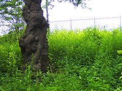 Central Park (Robbie1) Tags: centralpark newyorkcity tree