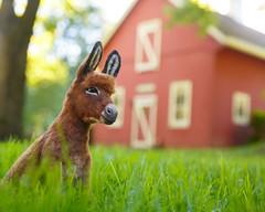 Donkey_7 (kdc123) Tags: donkey furred breyer custom ooak chestnut miniature