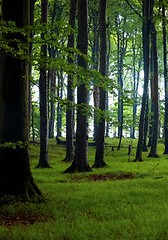 Buchenwald Nationalpark Jasmund 9 (kairemwatt) Tags: nationalparkjasmund mecklenburgvorpommern rgen buchenwald