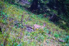 IMG_3370 (The Mitz Photography) Tags: gams grünersee hochschwab mariazell maryclan murmerl mädels nebel pilgern sommer steinbock wandern