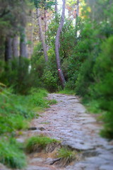 montemarcello (dinapunk) Tags: montemarcello italy liguria path road wood