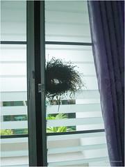 bird net (b. inxee♪♫) Tags: bird net
