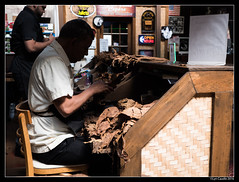"""Tobacco Selection • <a style=""""font-size:0.8em;"""" href=""""http://www.flickr.com/photos/19658346@N02/29453477791/"""" target=""""_blank"""">View on Flickr</a>"""
