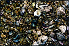 ... SDIM2716 (*melkor*) Tags: stilllife macro art beach nature colors seashells dark geotagged dead seaside colours experiment ground minimal soil seashell casual conceptual melkor casuality trashbit aseashellscarpet anabstractnatureproject