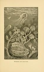 Anglų lietuvių žodynas. Žodis class hydrozoa reiškia klasės hydrozoa lietuviškai.