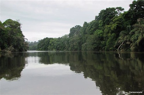 Río TORTUGUERO