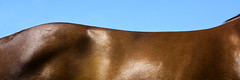 Horse as Landscape (Burningphotography) Tags: horse abstract landscape run 31 quail stables ratio