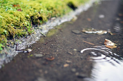 Day 44/365 ( (Ted)) Tags: nature water grass rain 35mm moss nikon small project365 d5100