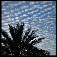 CLOUDS (Sultanate of Oman) (Denis F...) Tags: blue sky tree colors contrast square gulf couleurs middleeast east bleu ciel palmtree contraste middle nuages oman arbre muscat palmier clous carre  mascate moyenorient  masqat