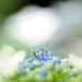20120617 Tsuruma park 9