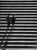 The Climb (CVerwaal) Tags: nyc newyorkcity newyork analog centralpark olympus ishootfilm oldschool xp2 ilford bethesdaterrace olympusstylus olympusmju1 artlegacy