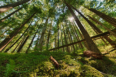 Forest Light (absencesix) Tags: travel trees summer plants usa green nature colors forest washington seasons unitedstates perspective july highcontrast noflash f90 northamerica sunburst sunbeam hdr rockport locations 2012 lowperspective cascaderange locale godrays northerncascades manualmode 14mm iso50 naturalevents northerncascadesnationalpark geo:state=washington geo:city=rockport exif:iso_speed=50 1424mmf28 thundercreektrail hasmetastyletag naturallocale selfrating4stars exif:focal_length=14mm camera:make=nikoncorporation exif:make=nikoncorporation geo:countrys=usa exif:lens=140240mmf28 exif:aperture=90 subjectdistanceunknown rockportwashingtonusa nikond800e 2012travel exif:model=nikond800e camera:model=nikond800e july72012 northerncascadesnationalpark0707201207082012 geo:lon=12107928157 geo:lat=4867822314 484042n121445w