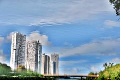 Recife Underwater (Americo Nunes) Tags: bridge sky reflection tree water gua clouds buildings river cu ponte nuvens recife rvore reflexo prdios riocapibaribe