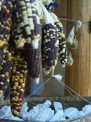 Drying corn and yak cheese (Nomad China) Tags: china yak cheese corn village yunnan tibetanfood xidang