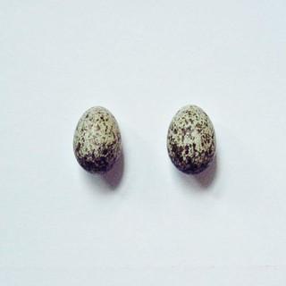 Sparrow Eggs