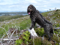Dougal (Màrtainn) Tags: dog chien skye cão cane lumix scotland highlands isleofskye alba hond escocia panasonic perro hund pies kutya labradoodle alban szkocja hundur suns pes escócia dougal schottland schotland ecosse anjing scozia kopek skottland собака koira skotlanti skotland koer broskos šuo câine escòcia anteileansgitheanach skócia albain iskoçya cù шотландия σκωτία σκύλοσ gàidhealtachd eileansgitheanach scoţia gleannnabèiste fz48 dmcfz48 panasonicfz48 panasonicdmcfz48