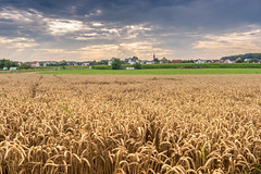 weather's changing (FirstFlo_) Tags: sun sunset corn field cornfield fields clouds cloudy cloud sky cloudscape landscape hdr high definition range yellow green blue